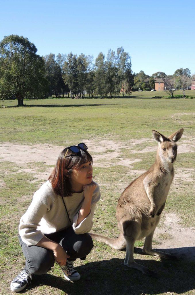 澳洲打工度假袋鼠